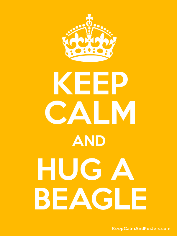KEEP CALM AND HUG A  BEAGLE Poster
