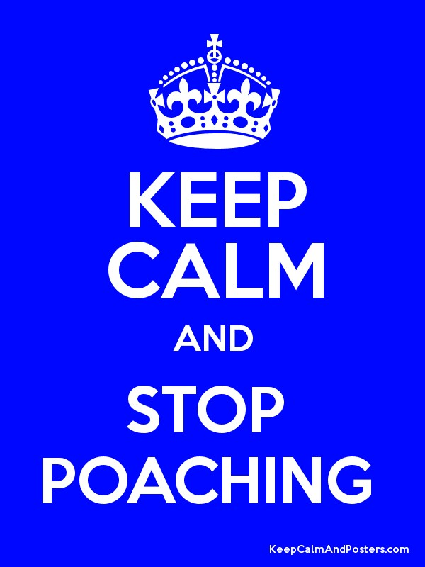 how i would stop poaching