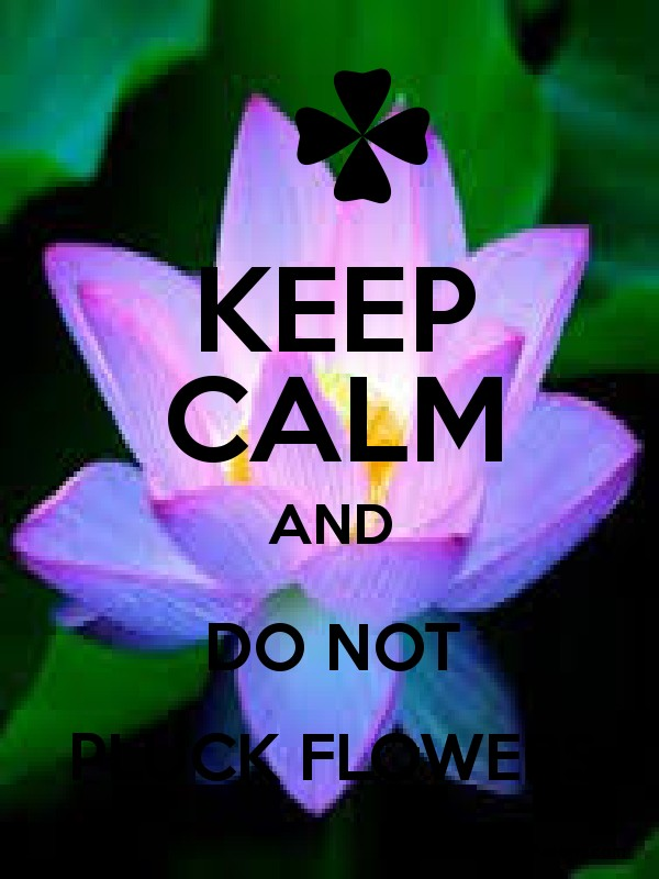 Keep Calm And Do Not Pluck Flowers Keep Calm And Posters Generator