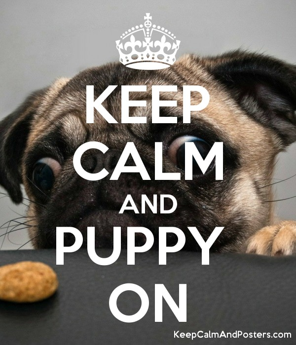 how to keep a puppy calm