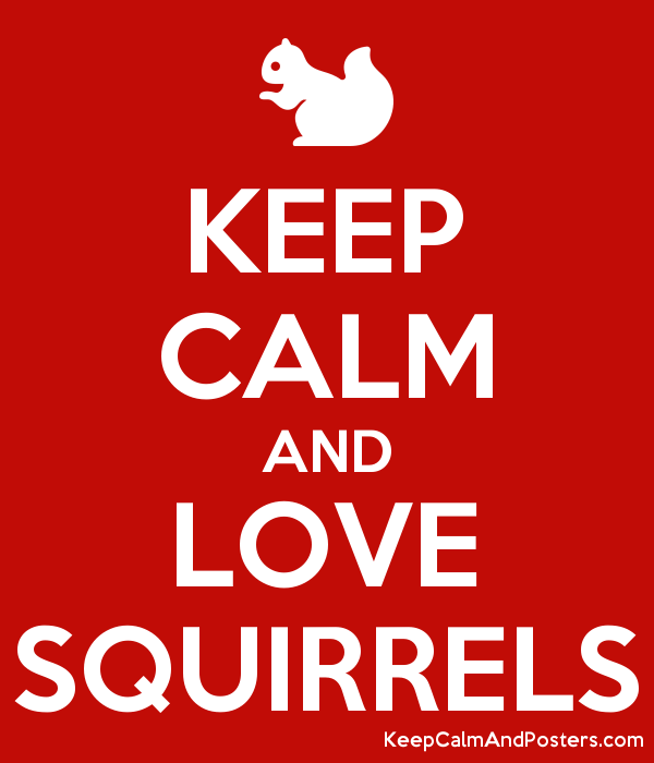 KEEP CALM AND LOVE SQUIRRELS Poster