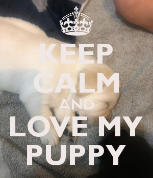 KEEP CALM AND LOVE MY PUPPY